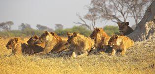Djurlivs Safari